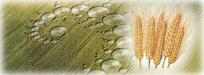"""an analysis of how crop circles are created Why are there crop circles  dr drew said the circles appeared to be created by an """"unknown energy that heats the crops up."""